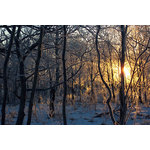 Winter sunrise in a forest