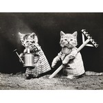 Vintage photo of dressed cats