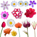 Different flowers isolated