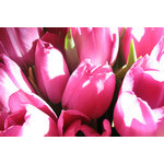 Tulips bouquet macro photo
