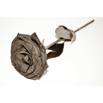 filtered grey rose isolated