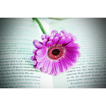 Flower on book