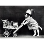 Dressed animals on vintage photo