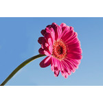 Flower on blue sky background