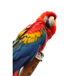 Colorful macaw sitting on a branch