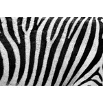 Zebra pattern close up