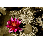 Water lily on the ground
