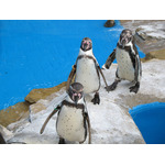Grupo de pinguins no zoológico